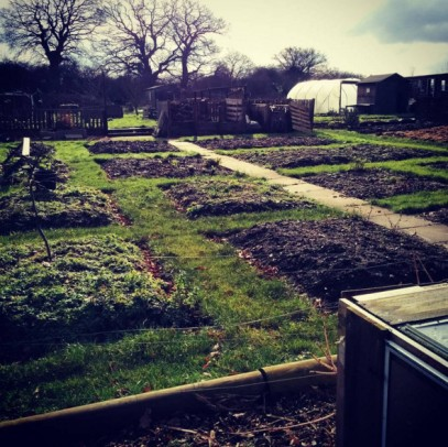 How to get an allotment