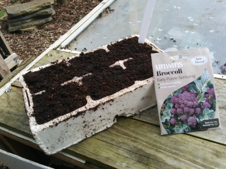 Broccoli: Early Purple Sprouting