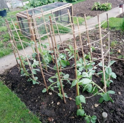 broad bean bunyard exhibition cage