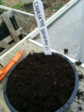 Courgette defender seeds pot