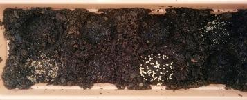 Herb garden seeds