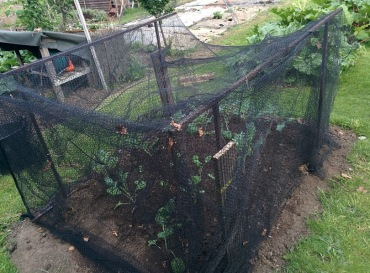 Broccoli netting and frame