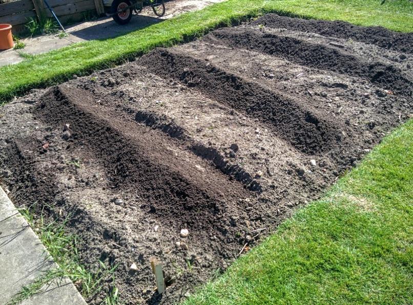 potato mound up rows