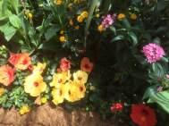 RHS Hampton Court Flower Show 2016 8
