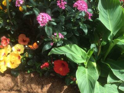 RHS Hampton Court Flower Show 2016 9