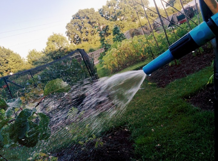 Hosepipe ban: Tips on How to save water when growing your own