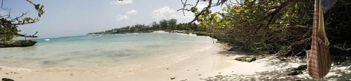 Discovering the nature of Barbados…