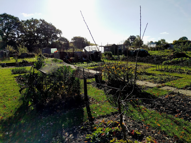 Allotment-Autumn-2016