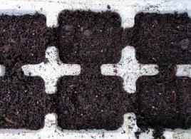 Cauliflower All Year Round plant box seeds