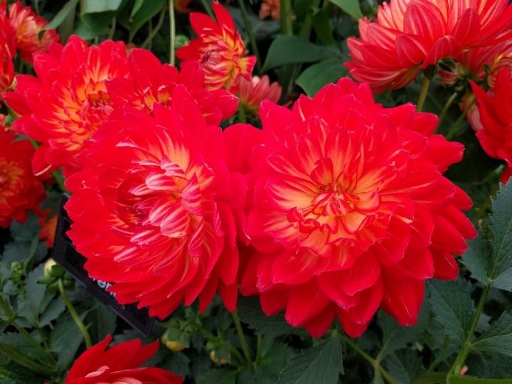 RHS Hampton Court Flower Show2016