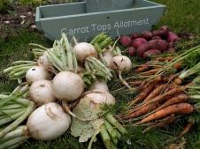 Carrot tops summer 2017 10