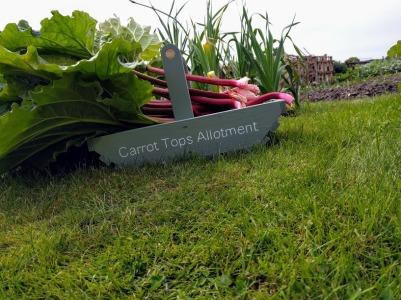 Carrot tops summer 2017
