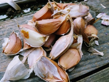 Germidour Garlic cloves
