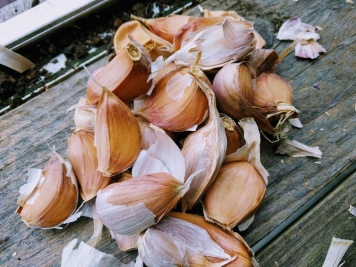 Thermidrome Garlic Cloves