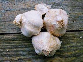 Thermidrome Garlic
