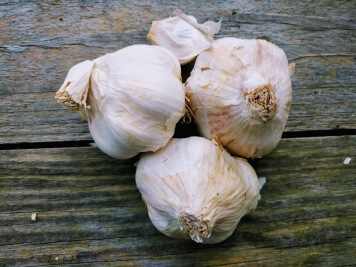 Thermidrome Garlic