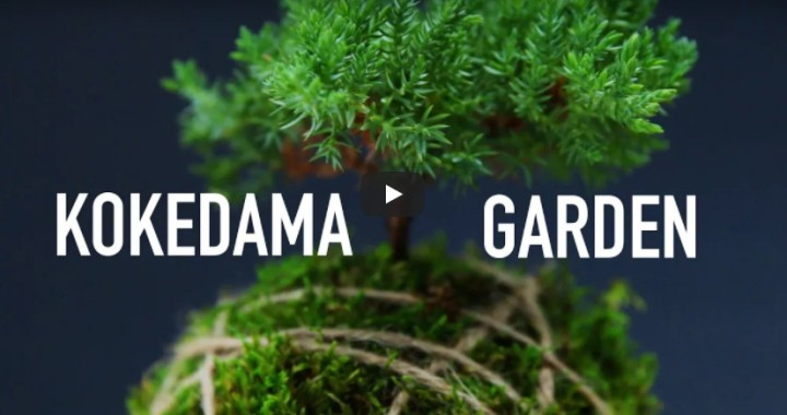 10 Favourite Gardening Buzzfeed videos#2