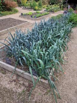 Painshill, Kitchen garden 8