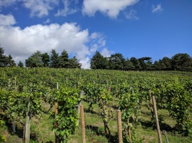 Painshill park, Vineyards 2