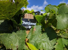 Painshill park, Vineyards 6