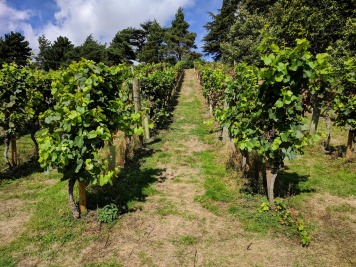 Painshill park, Vineyards 7